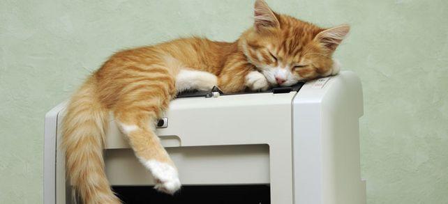 Tiere am Arbeitsplatz – ist das erlaubt? Der MuM-Ratgeber klärt auf.