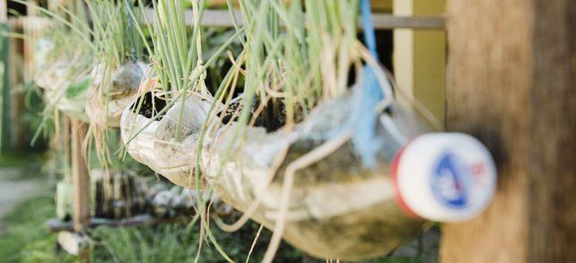 Aus PET-Flaschen wachsen Gräser: Idee für einen nachhaltigen Blumenkasten beim Verpackungshersteller KHS.